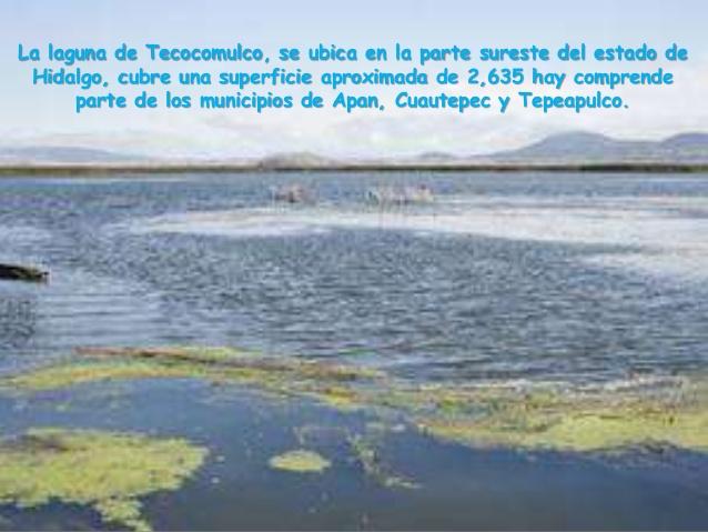 la-laguna-de-tecocomulco-2-638