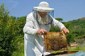 negocio-de-apicultura