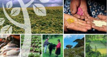 perspectivas-de-la-agricultura-y-del-desarrollo-rural-en-las-americas-2013