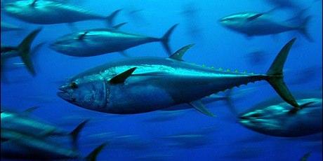 3087_bluefin-tuna_greenpeace