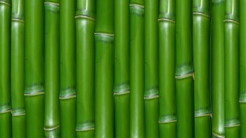 green-bamboo_00389757