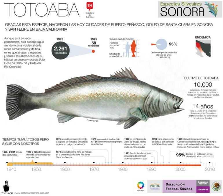 totoaba_fish_critically_endangered_by_memuco-d4xqpfm
